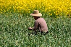 Pengzhou, Cina: Agricoltore nel campo di aglio Fotografia Stock Libera da Diritti