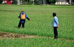 Pengzhou, Cina: Agricoltore Spraying Field Immagine Stock Libera da Diritti