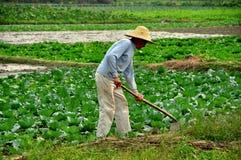 Pengzhou, Cina: Agricoltore Working nel campo Fotografia Stock Libera da Diritti