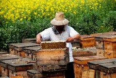 Pengzhou, Cina: Apicoltore sul lavoro Fotografia Stock