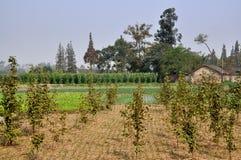Pengzhou, Cina: Azienda agricola della provincia di Sichuan Immagine Stock