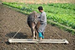 Pengzhou, Cina: Coltivatore che ara campo Fotografia Stock