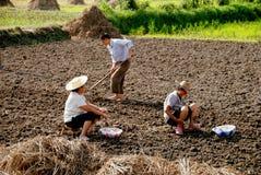 Pengzhou, Cina: Coltivatori che piantano aglio Fotografie Stock Libere da Diritti
