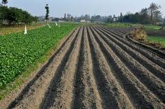 Pengzhou Kina: Lantgårdfält som läser för att plantera Arkivbild