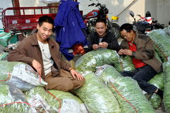Pengzhoul, China: Workers at Farm Co-op Stock Images