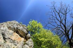 Penhasco-árvore-undergrowth-céu imagens de stock