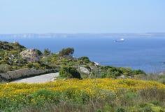 Penhasco com prado colorido (Malta) Fotografia de Stock