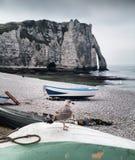 Penhasco e gaivota de Etretat em Normandy, França Foto de Stock
