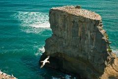 Penhasco no mar com gaivota fotografia de stock