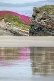 Penhascos cobertos com as flores na praia Imagens de Stock Royalty Free