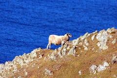 Penhascos da liga da luva - Irlanda Fotografia de Stock