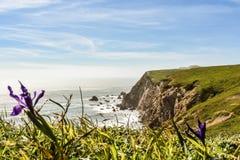 Penhascos do oceano e uma flor imagem de stock