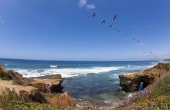 Penhascos do por do sol com pelicanos Foto de Stock