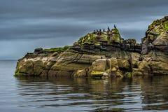 Penhascos na forma de uma cabeça de Dragon With Cormorants de sono e de um selo na costa de Escócia fotografia de stock