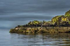 Penhascos na forma de uma cabeça de Dragon With Cormorants de sono e de um selo na costa de Escócia fotos de stock royalty free