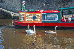 Penine cruisers boat trips. Narrow boat on Leeds and Liverpool canal at Skipton Yorkshire carrying passengers with two swans gliding along beside it Stock Photo
