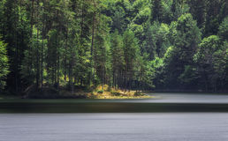 Peninsula forest in lake. Batak (Bulgaria Royalty Free Stock Photos