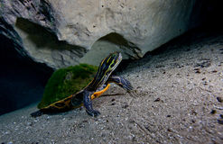 Peninsula - Morrison Springs Cavern Stock Photo
