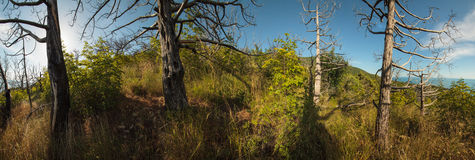 Penisola di Abrau, riserva Utrish Fotografia Stock