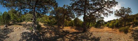 Penisola di Abrau, riserva Utrish Immagine Stock
