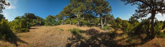 Penisola di Abrau, riserva Utrish Fotografie Stock