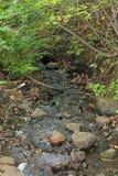 Penn Creek Royaltyfri Fotografi
