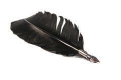Penna di spoletta nera Fotografia Stock