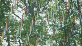 Pennants hanging on line amid tree branches stock footage