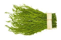 Pennata del acacia en el fondo blanco Foto de archivo