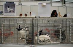 Penne dei conigli a Pollice Verde Fotografia Stock Libera da Diritti