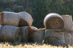 Penned  the summer hay to feed the animals at the farm in wint Royalty Free Stock Images
