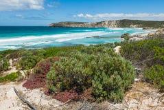 Pennington-Bucht, Känguru-Insel Lizenzfreie Stockbilder