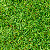 Pennisetum clandestinum garden lawn Royalty Free Stock Image