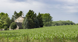 Pennsylvania Cornfield and Old Stone Barn Royalty Free Stock Images