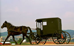 Pennsylvania Dutch Horse and Buggy Royalty Free Stock Photography