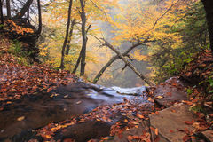 Pennsylvania Autumn Leaves Top of Ganoga Waterfall Royalty Free Stock Photos