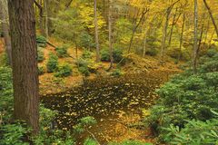 Pennsylvania Forest In Autumn Stock Image