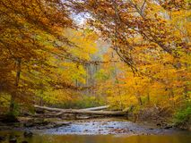 Forest Creek in Autumn, Pennsylvania Woodland, Ridley Creek State Park Royalty Free Stock Photography