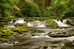 Pennsylvania Forest Stream Stock Photo