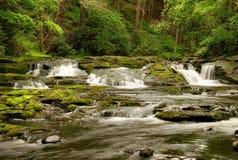 Pennsylvania Forest Stream stock photo