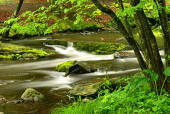 Pennsylvania Forest Stream. A forest stream in the spring, captured at Delaware Water Gap National Park in northeastern Pennsylvania Royalty Free Stock Photos