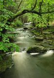 Pennsylvania Forest Stream Stock Photos