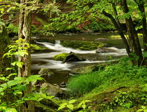 Pennsylvania Forest Stream. A forest stream in springtime, captured at  Delaware Water Gap National Park in northeastern Pennsylvania Stock Photography