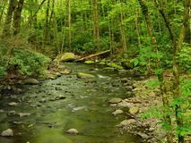 Pennsylvania Forest Stream In Spring stock photos