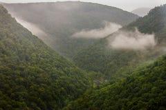Pennsylvania Grand Canyon. The Pennsylvania Grand Canyon in early morning fog Royalty Free Stock Photos