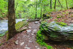 Pennsylvania Hiking Trail Stock Photography