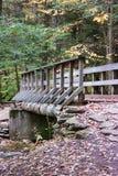 Pennsylvania Ricketts Glen State Park Landscape Arkivfoton