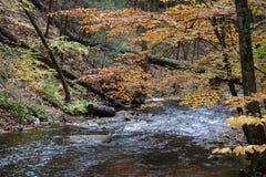 Pennsylvania Ricketts Glen State Park Landscape Arkivfoto
