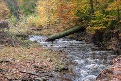 Pennsylvania Ricketts Glen State Park Landscape Royaltyfri Foto