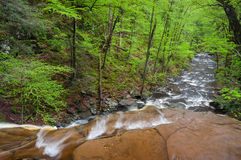 Pennsylvania Ricketts Glen State Park Spring Scenic Royalty Free Stock Photos